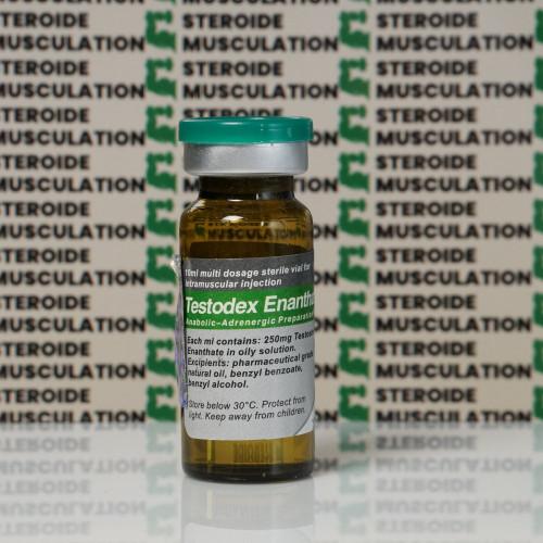 Testodex Enanthate 250 mg Sciroxx | SMC-0154